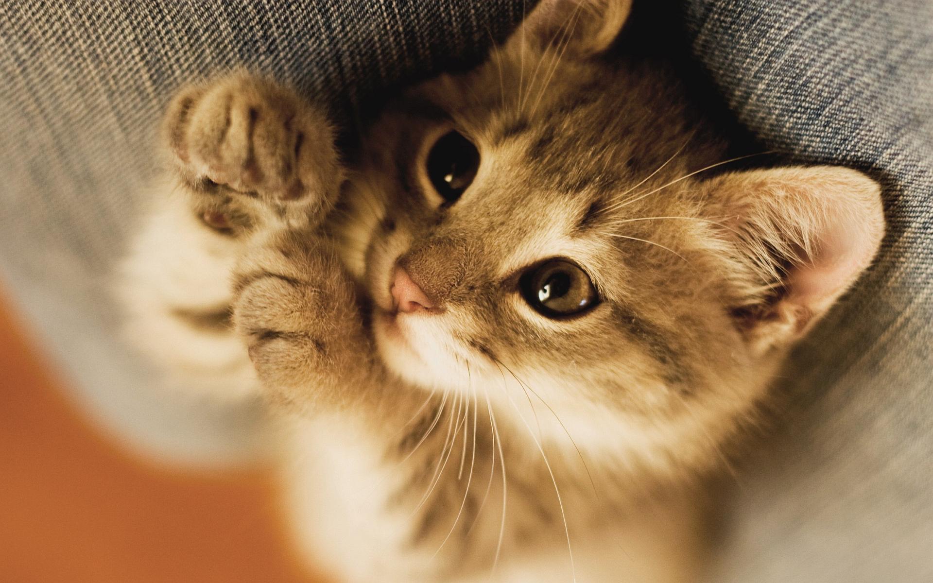 Lovely little kitty
