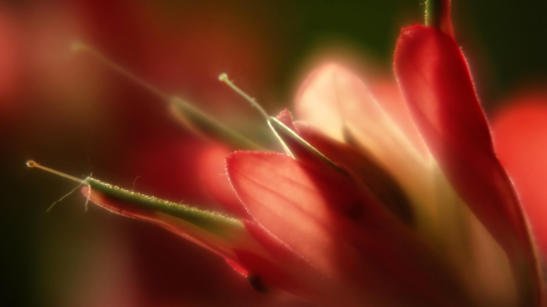Lovely Macro Flowers Wallpaper