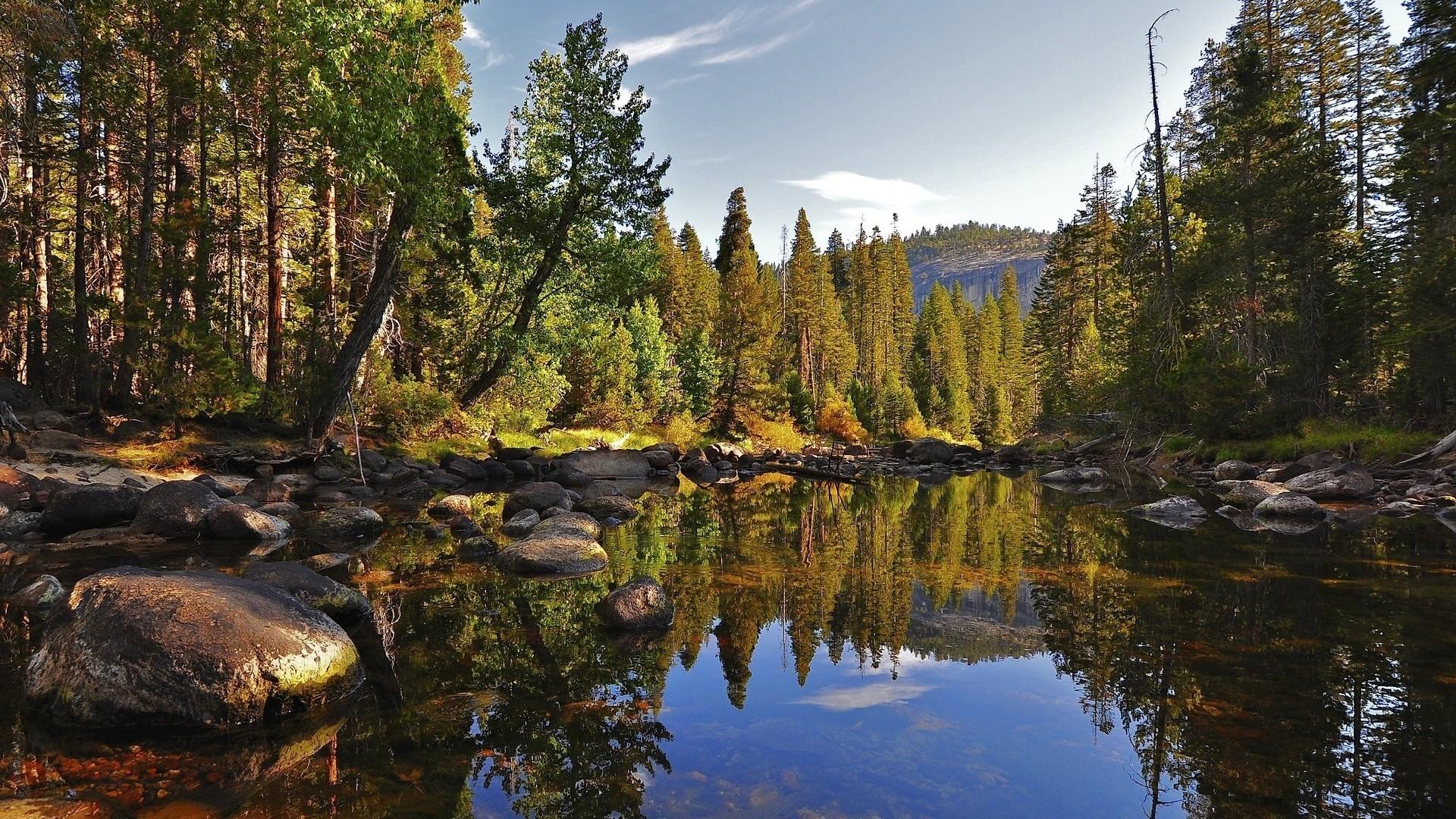 Lovely Pine Forest Wallpaper
