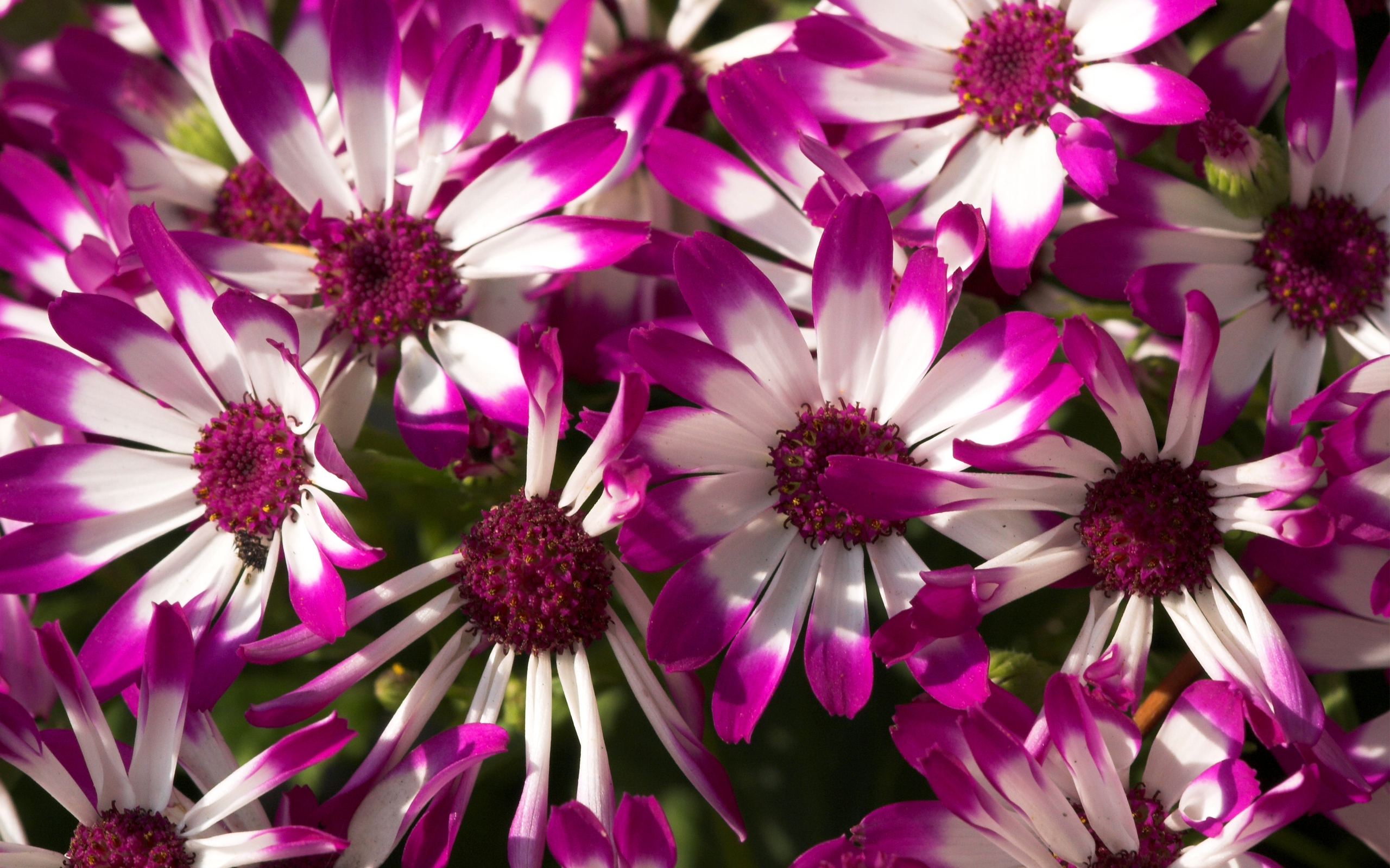 Lovely Purple Flowers Wallpaper