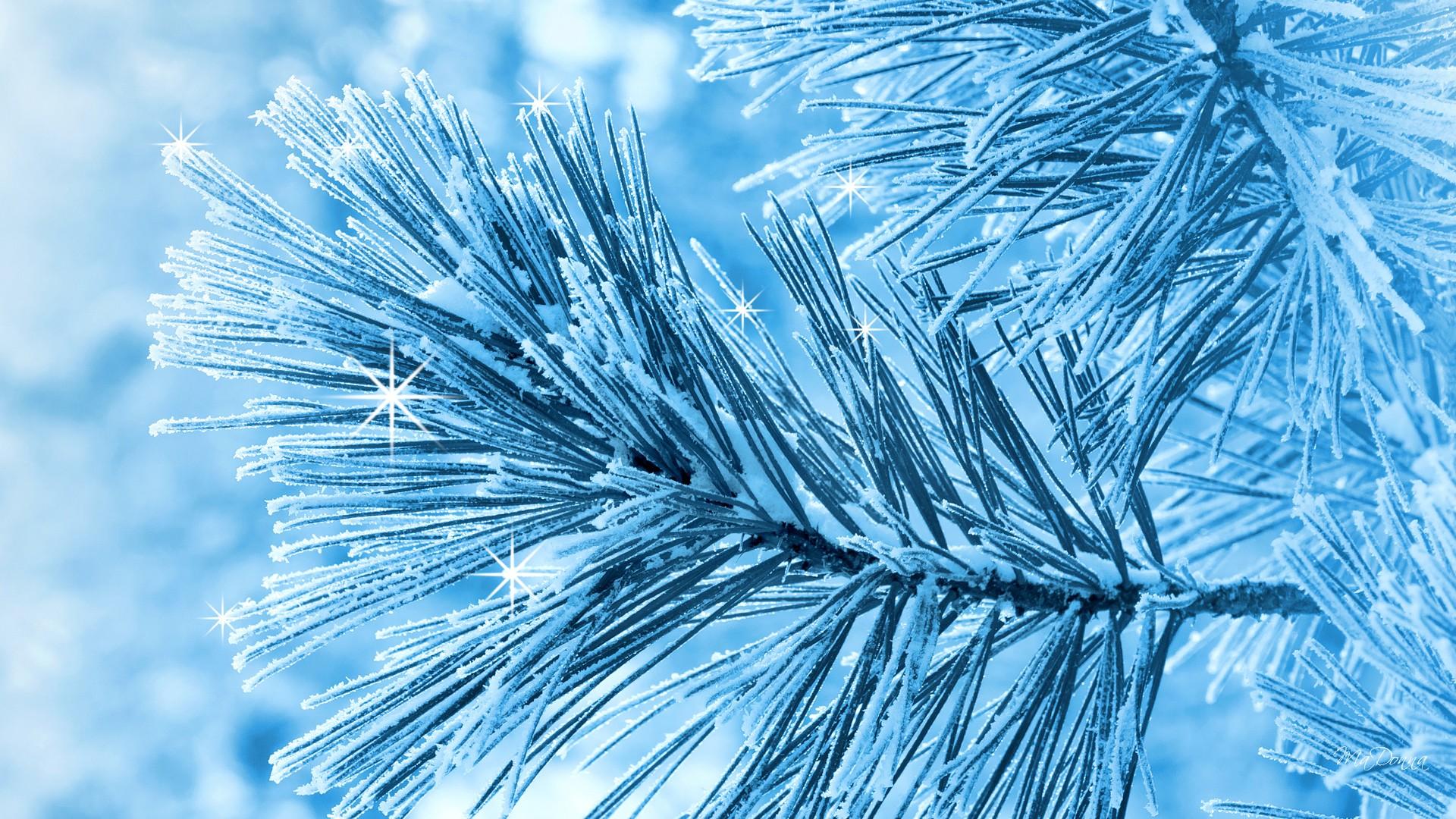 Lovely Snow Pine Wallpaper