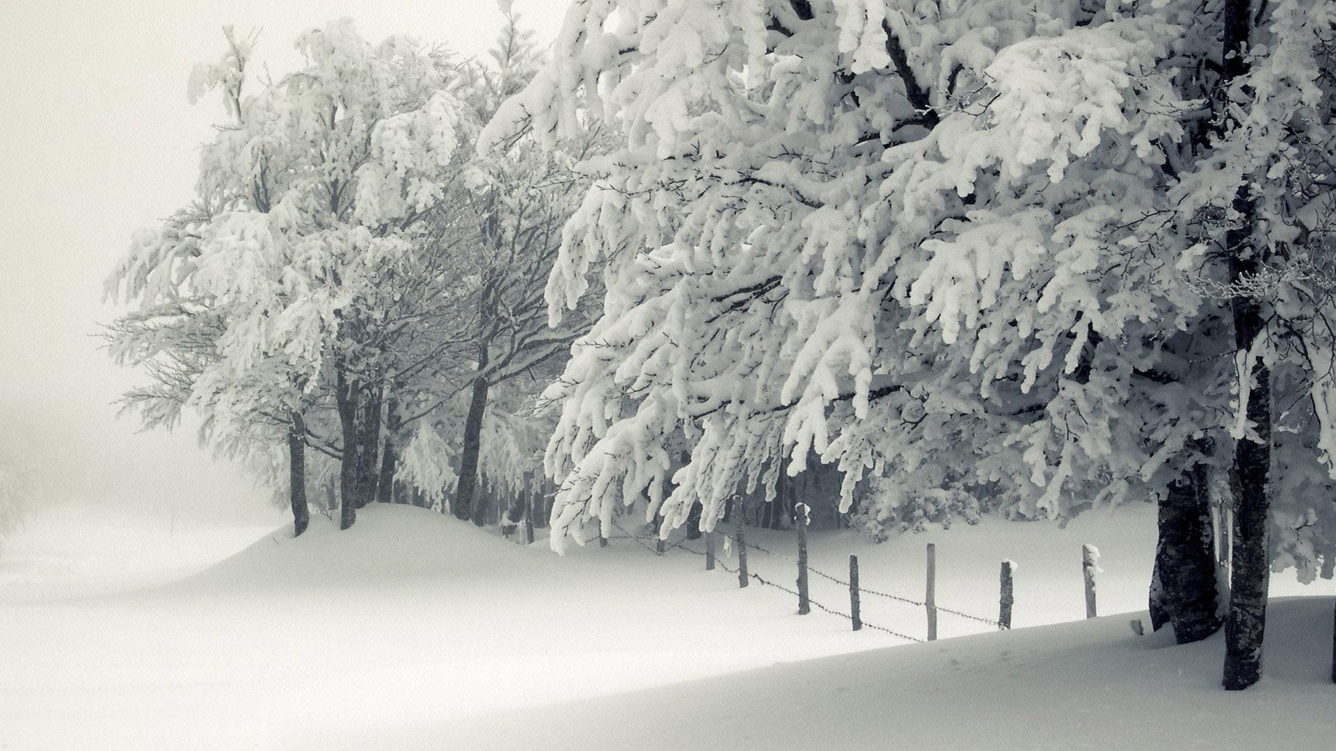 Lovely Snowy Trees Wallpaper