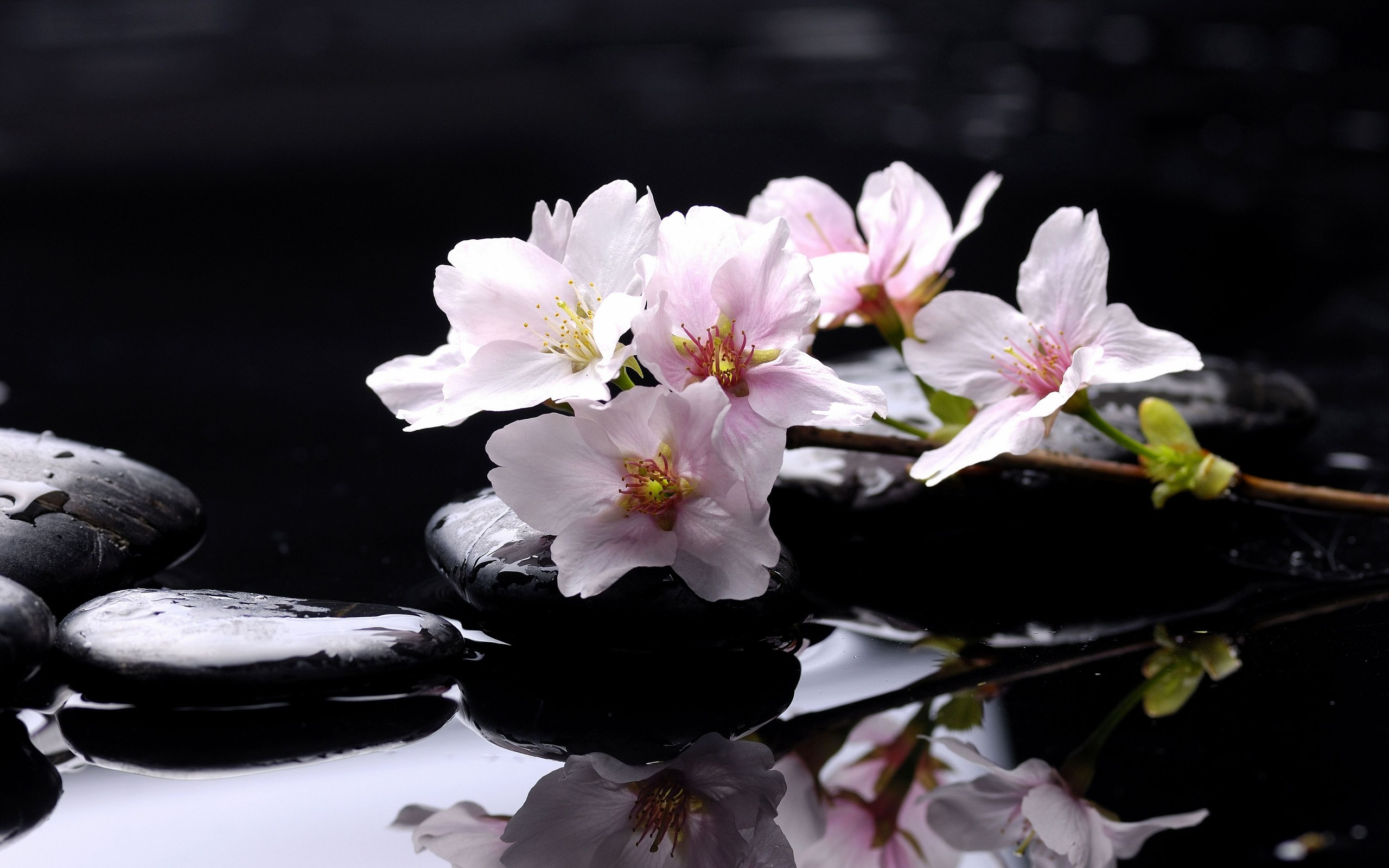 Lovely Spa Wallpaper 42680 2560x1600 px