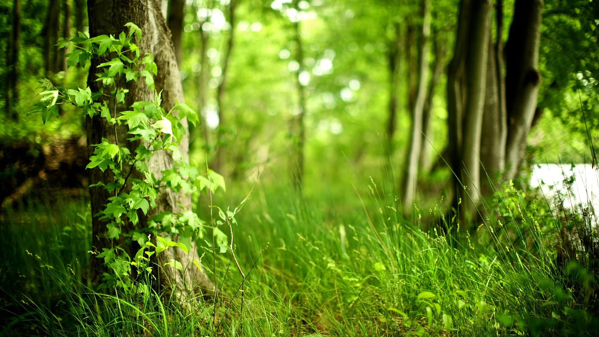 Lovely Spring Forest Wallpaper