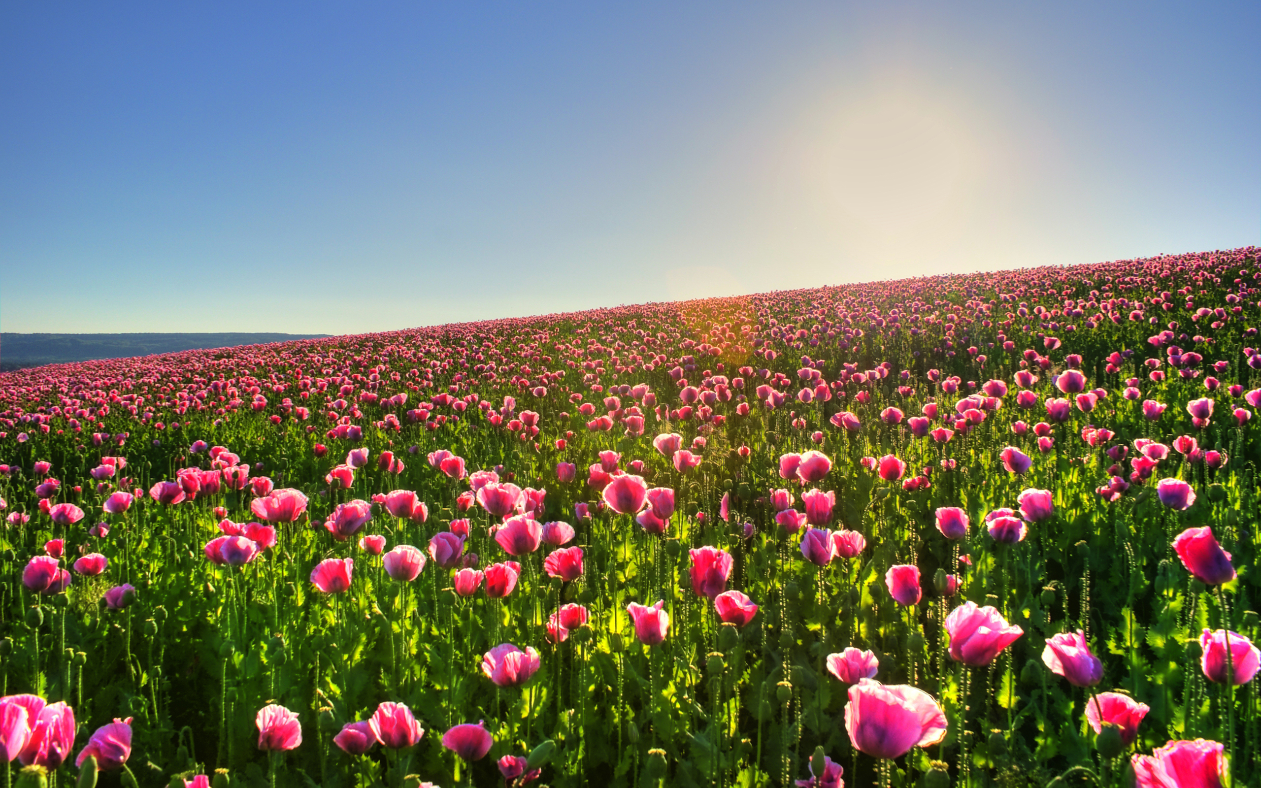 Lovely Spring Meadow Wallpaper