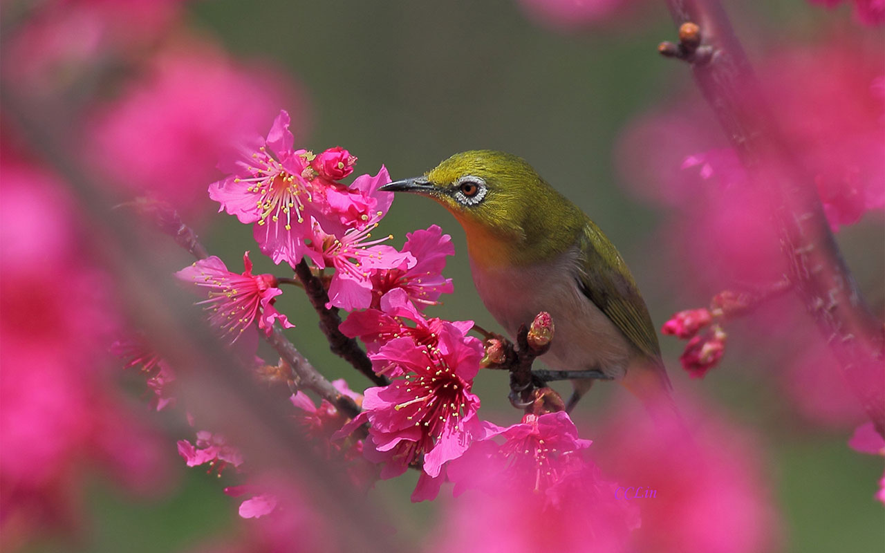 Lovely Spring Wallpaper 45319 1680x1050 px