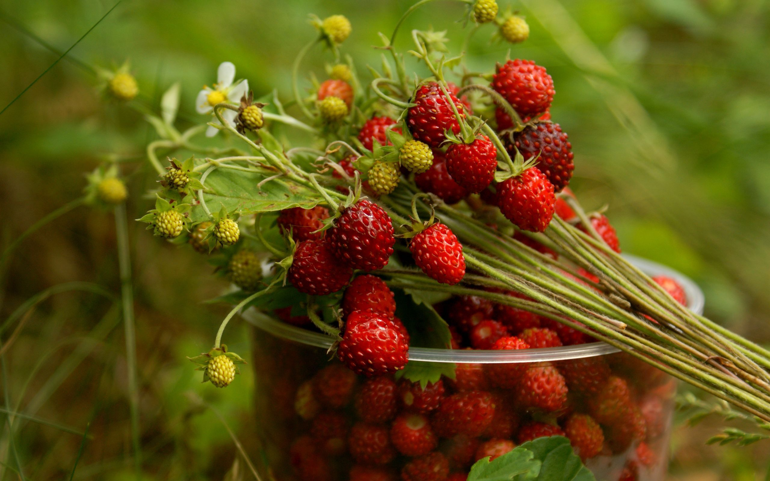 Lovely Strawberries Wallpaper