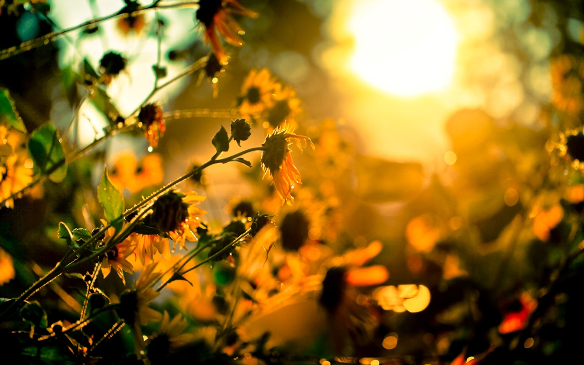 """Download the following Lovely Sunshine Wallpaper 488 by clicking the button positioned underneath the """"Download Wallpaper"""" section."""