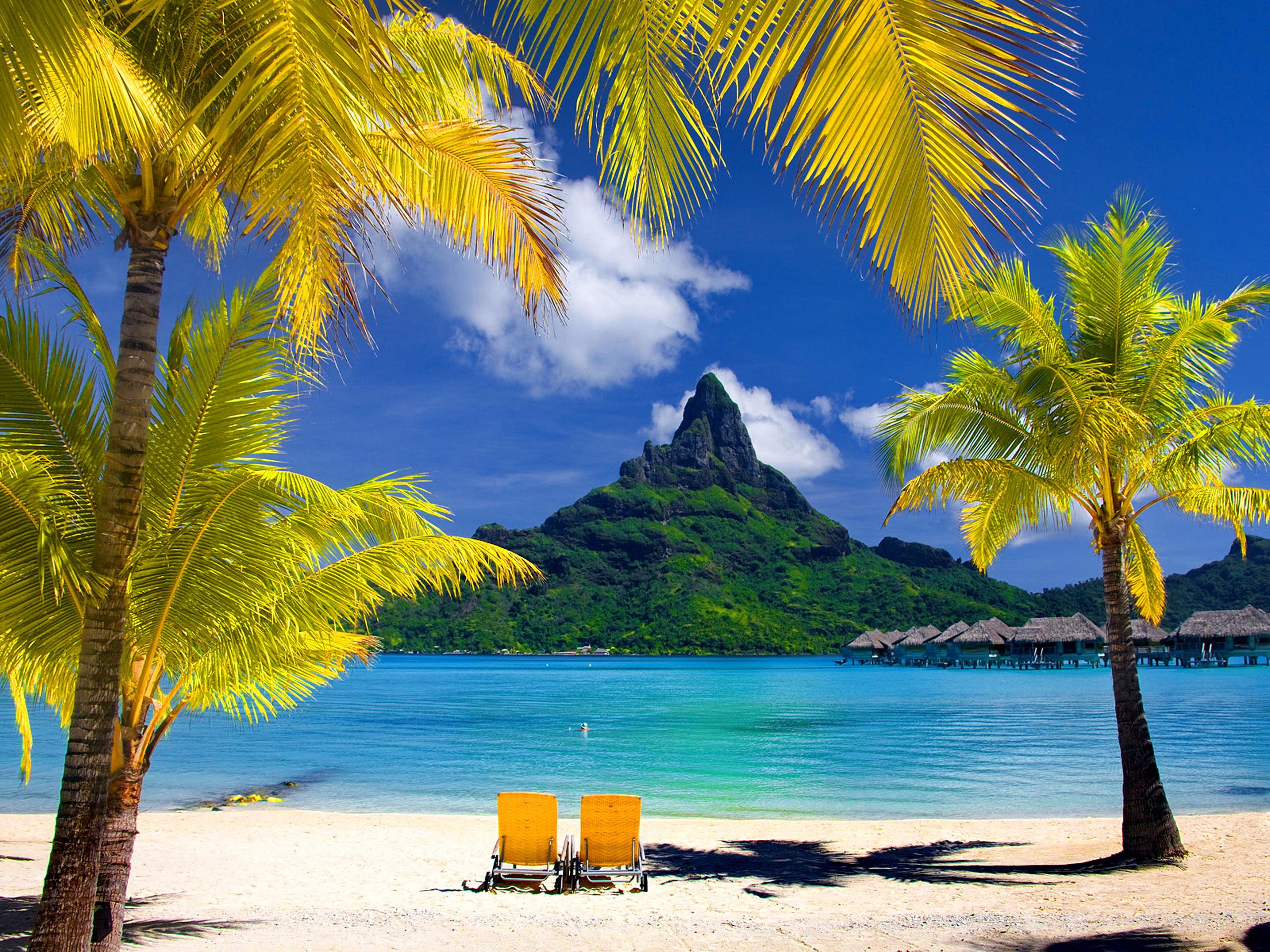 Lovely Tropical Wallpaper