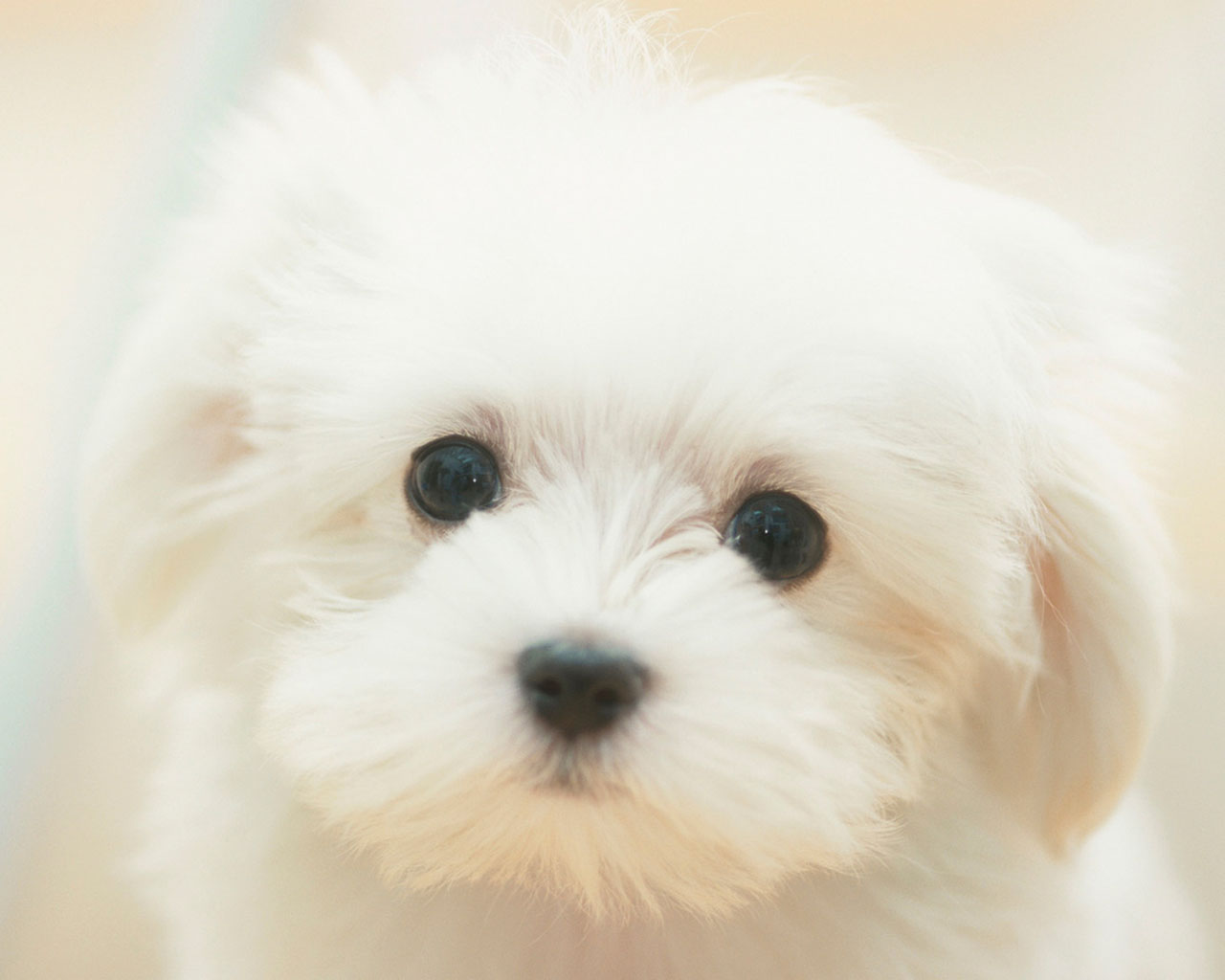 Lovely White Dog Photo