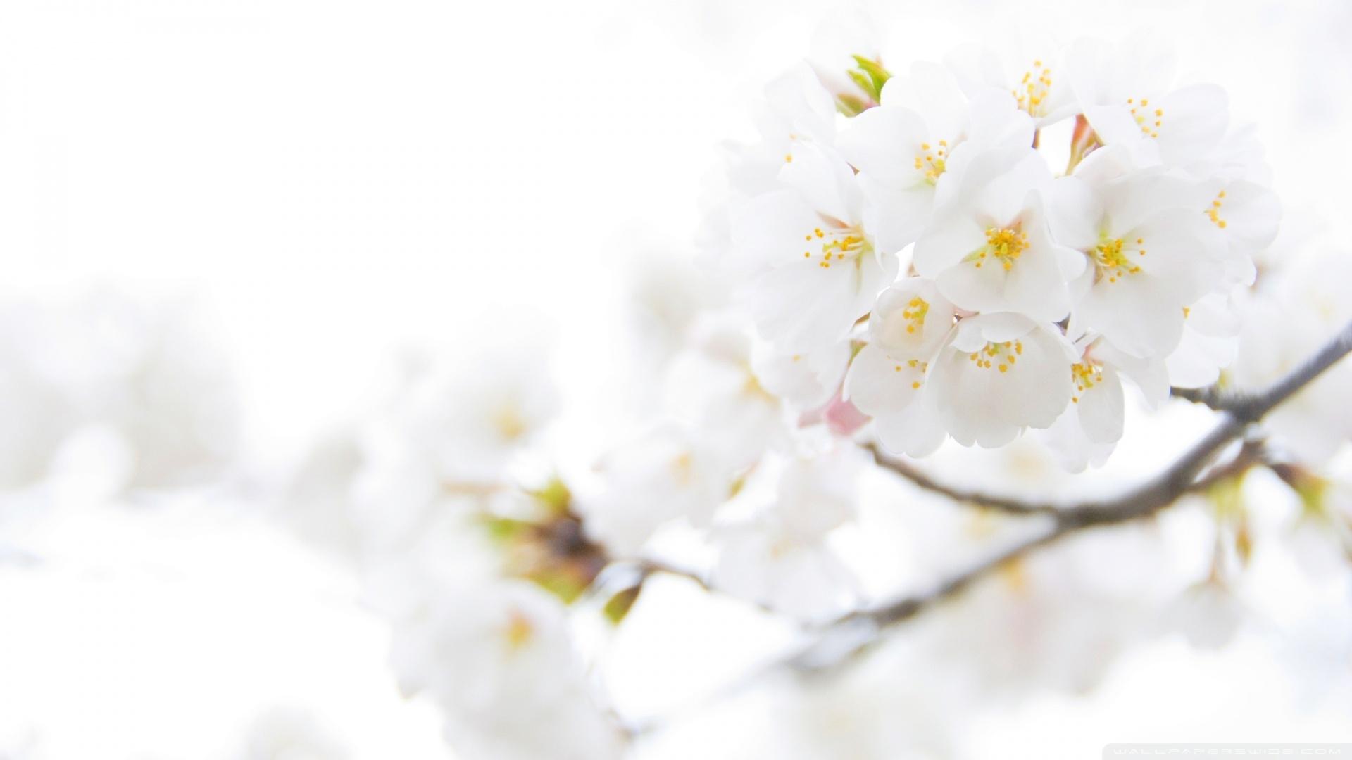 Lovely White Flowers Wallpaper