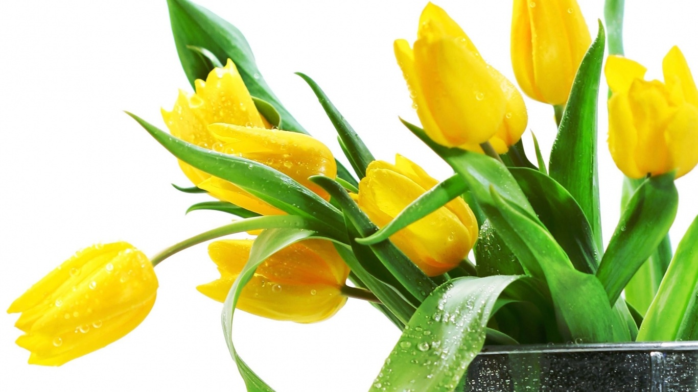 Lovely Yellow Flowers Wallpaper