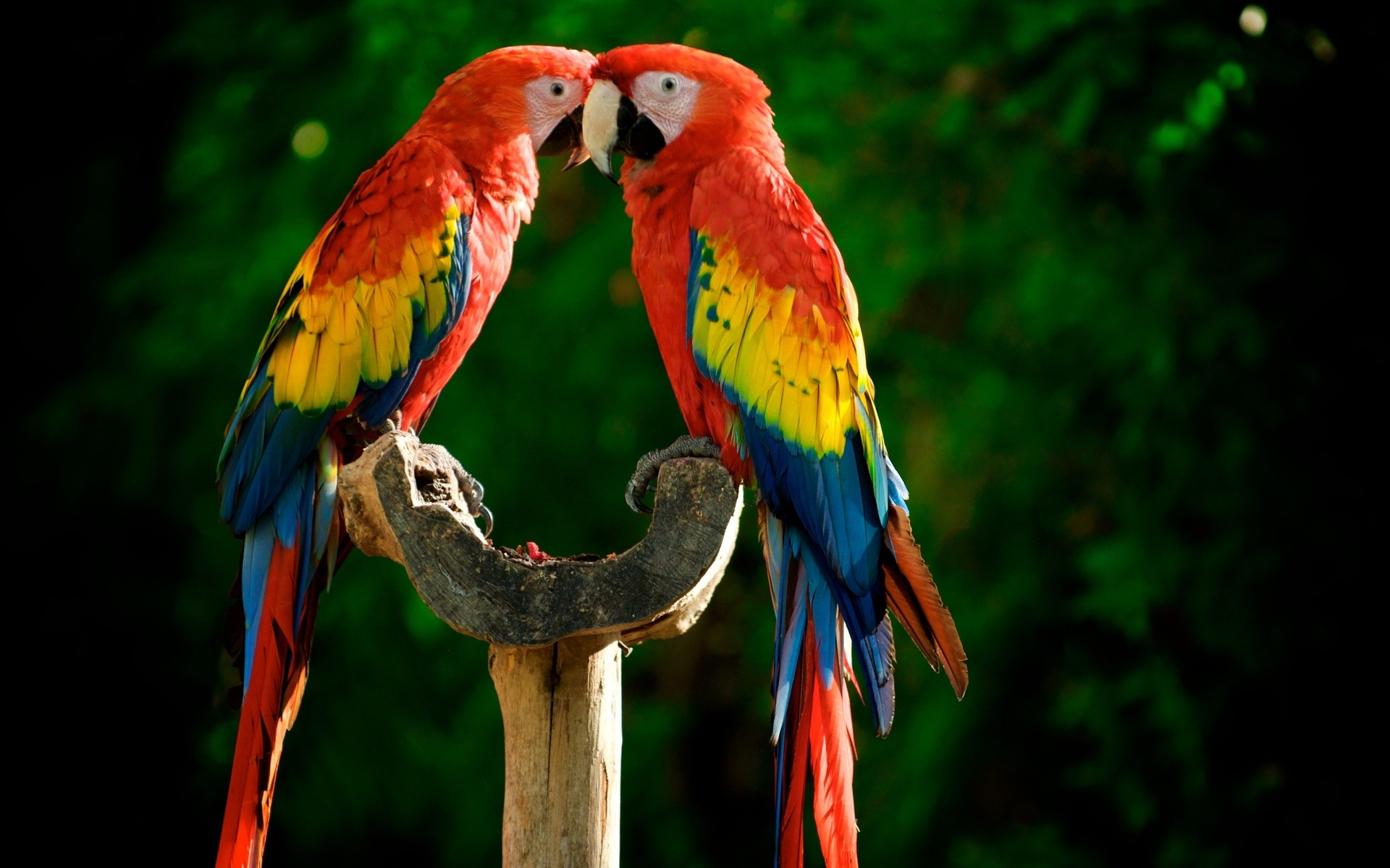 Cute Macaw Wallpaper ...