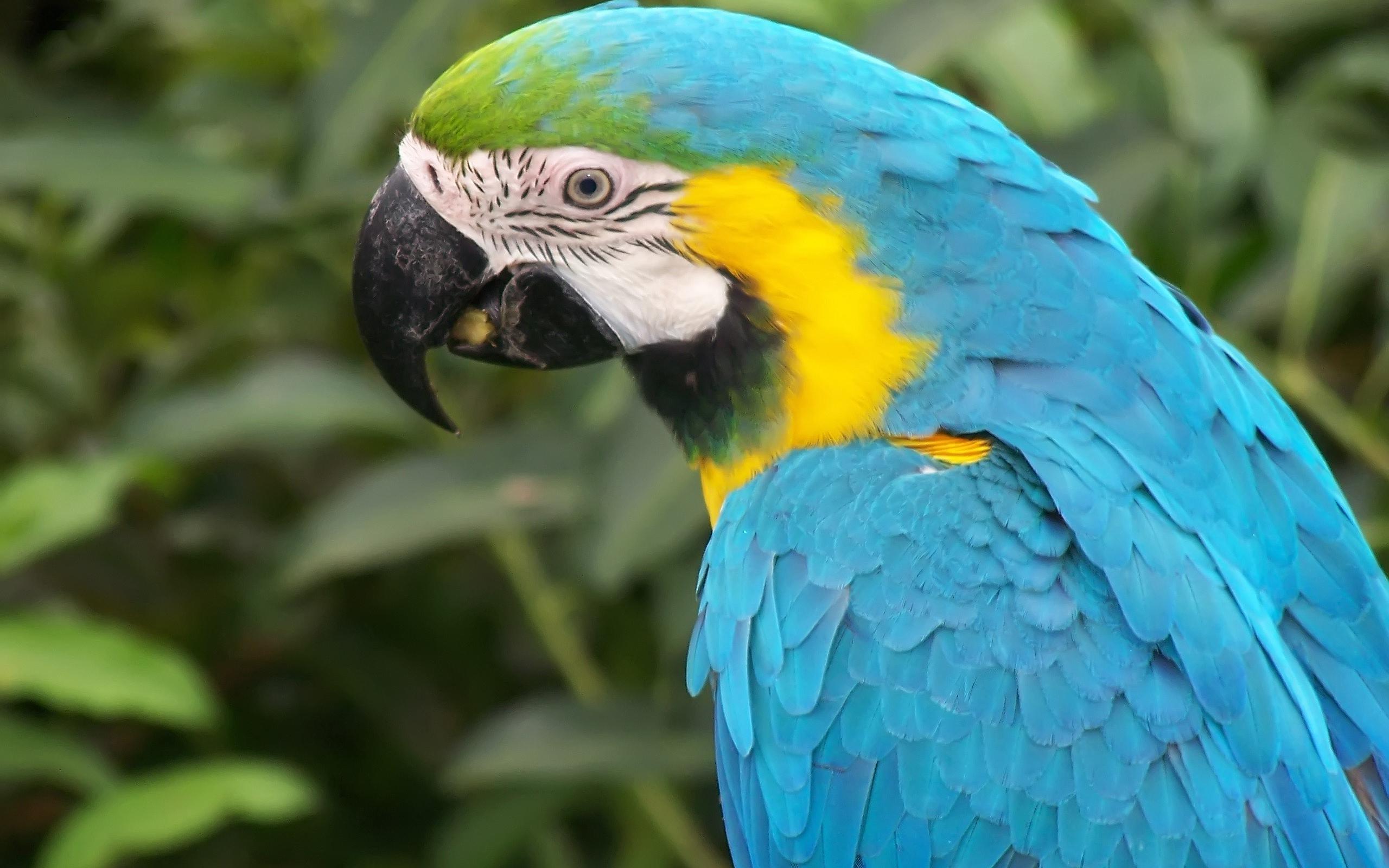 Macaw · Macaw ...