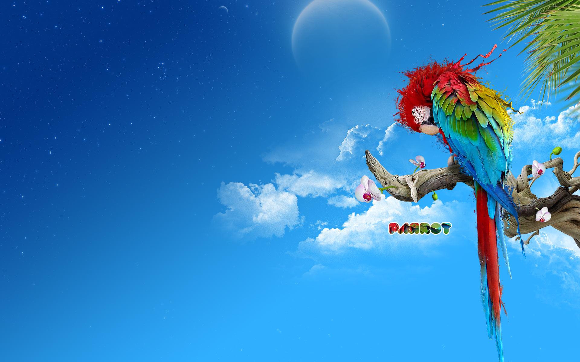 Macaw Background