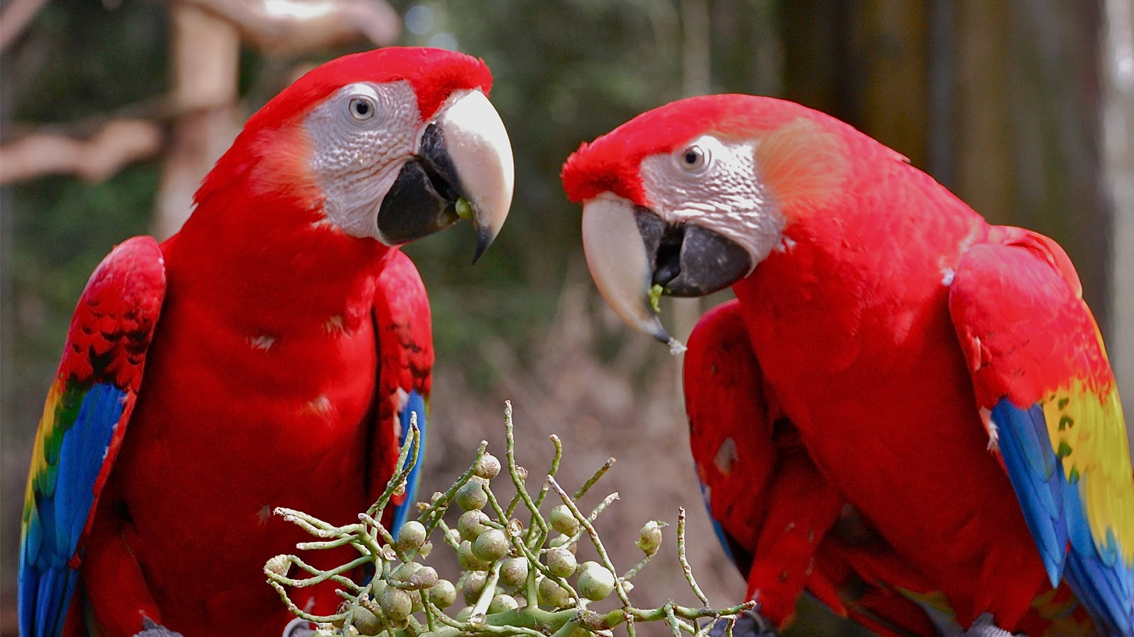 Macaw parrot hd