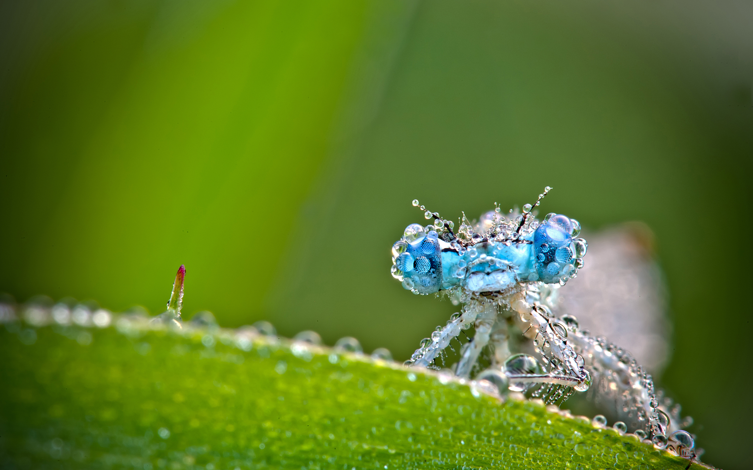 ... insect-macro-wallpaper-raindrops-2880x1800 ...