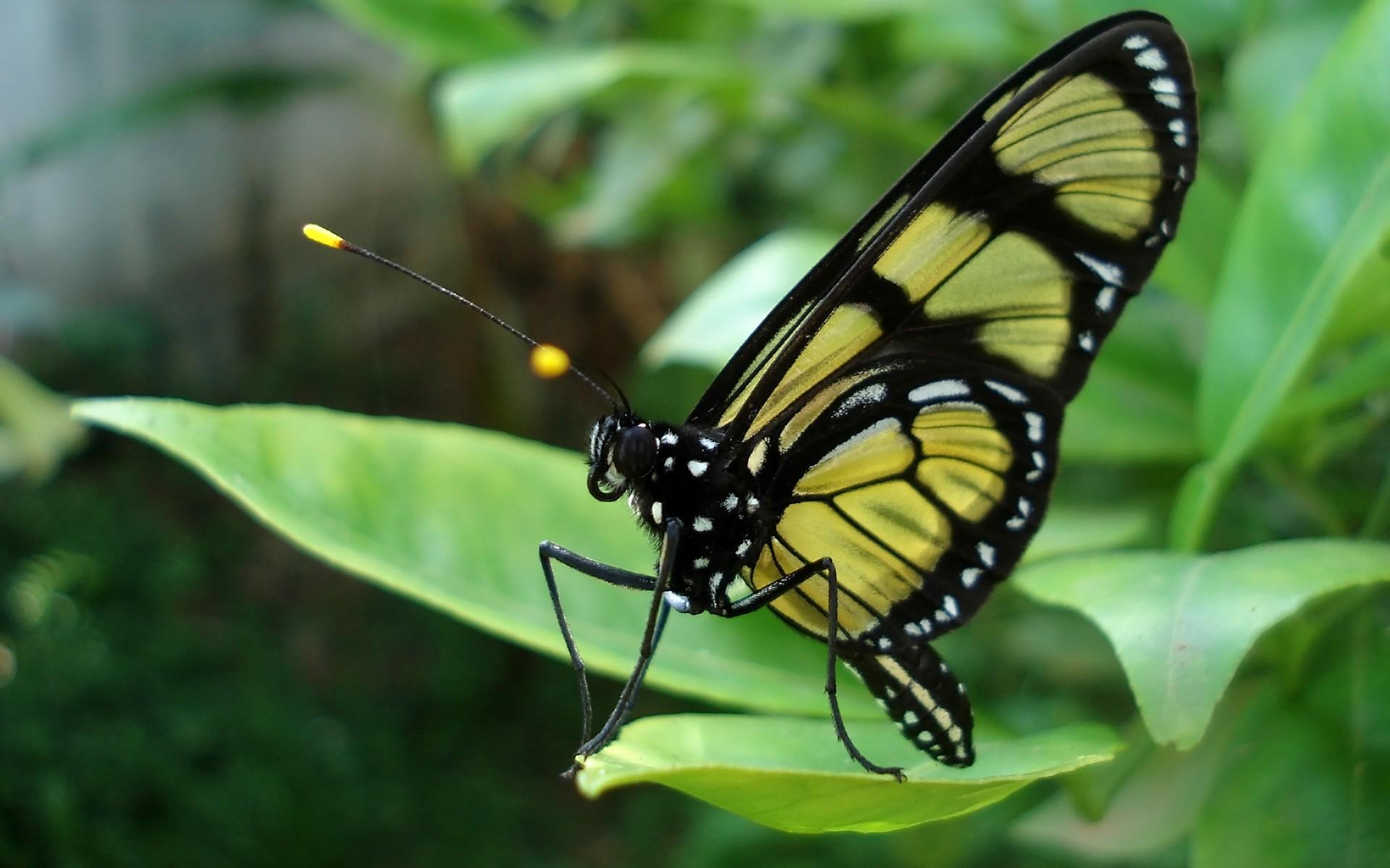 macro butterflies HD Wallpaper