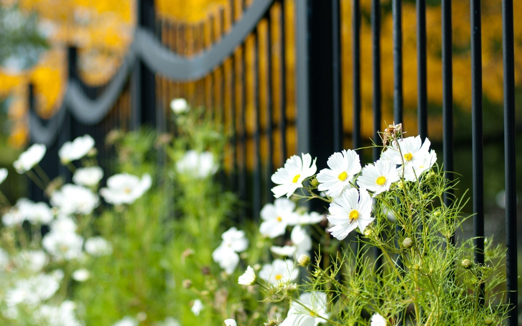 Macro Fence Flowers White Plants