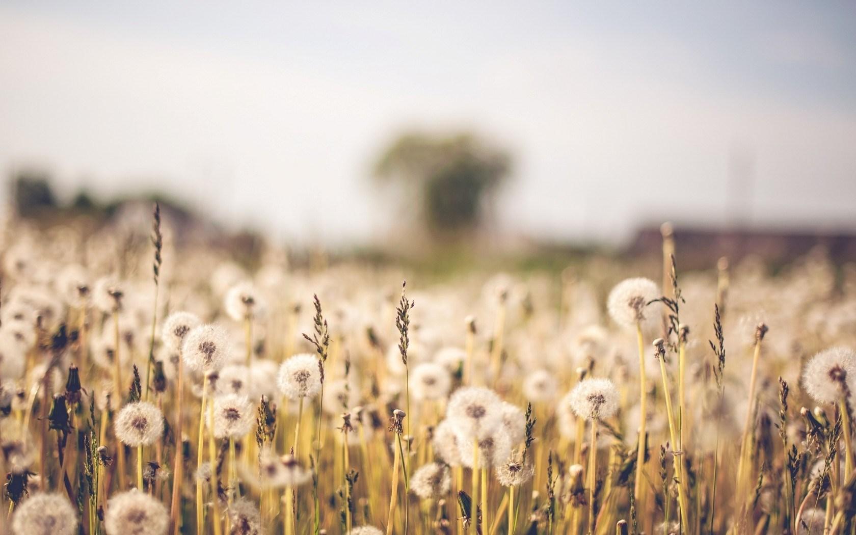 Macro Field · Macro Field Backgrounds ...