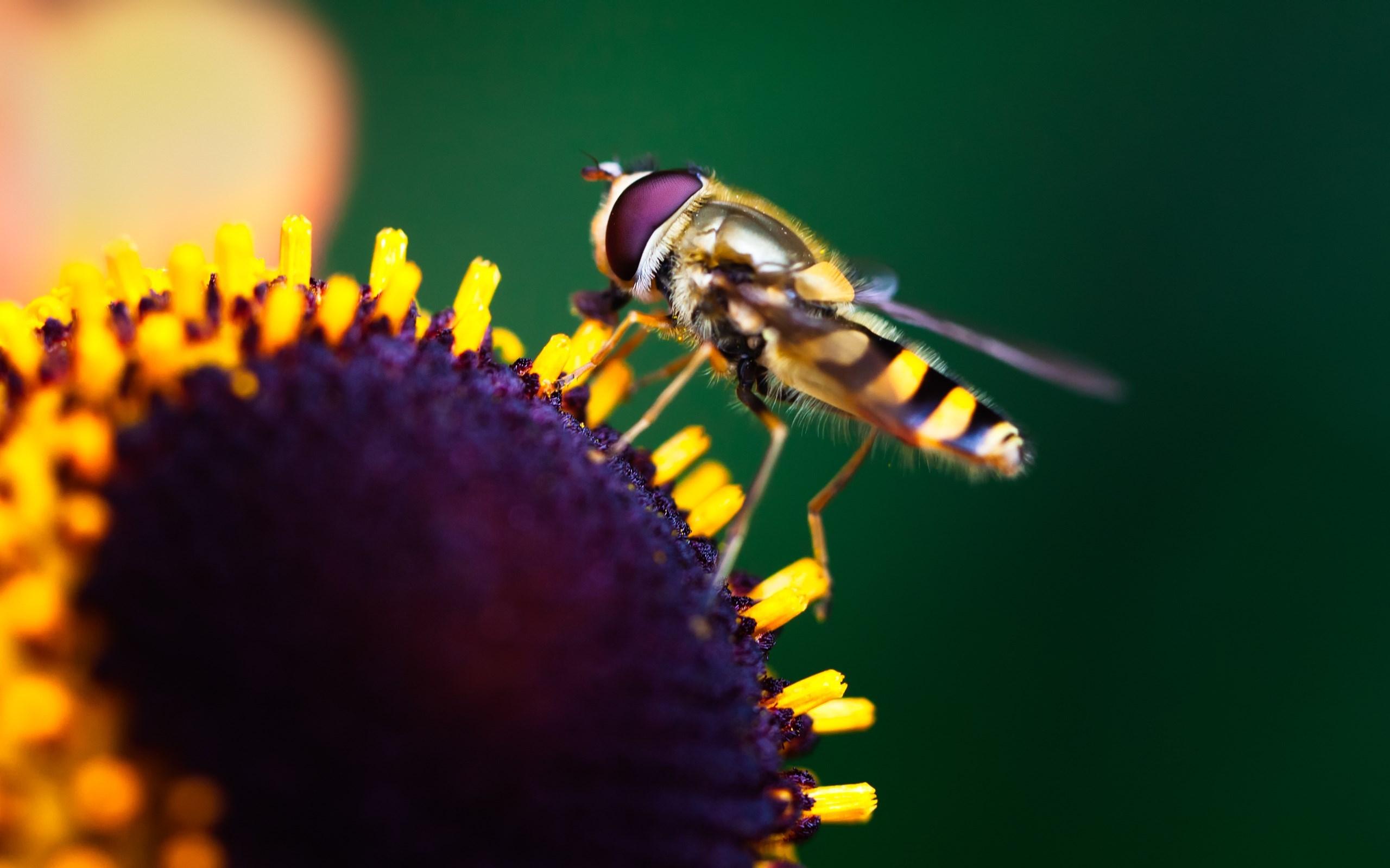 Macro Flower Insect HD Wallpaper