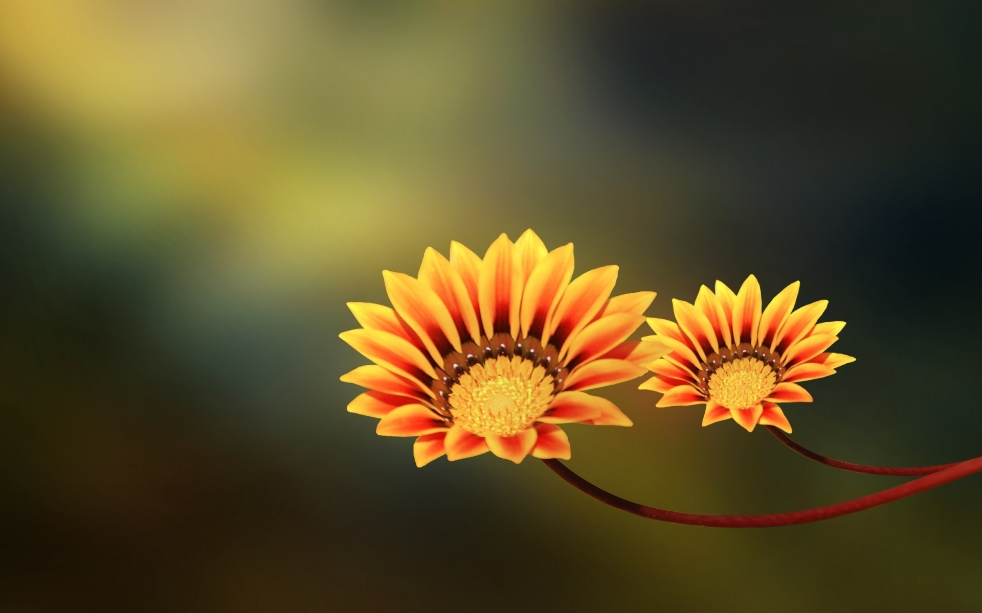 Macro flower wallpaper Pc
