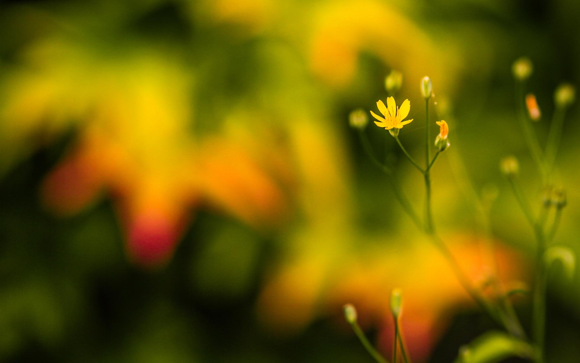 Macro Flowers Wallpaper