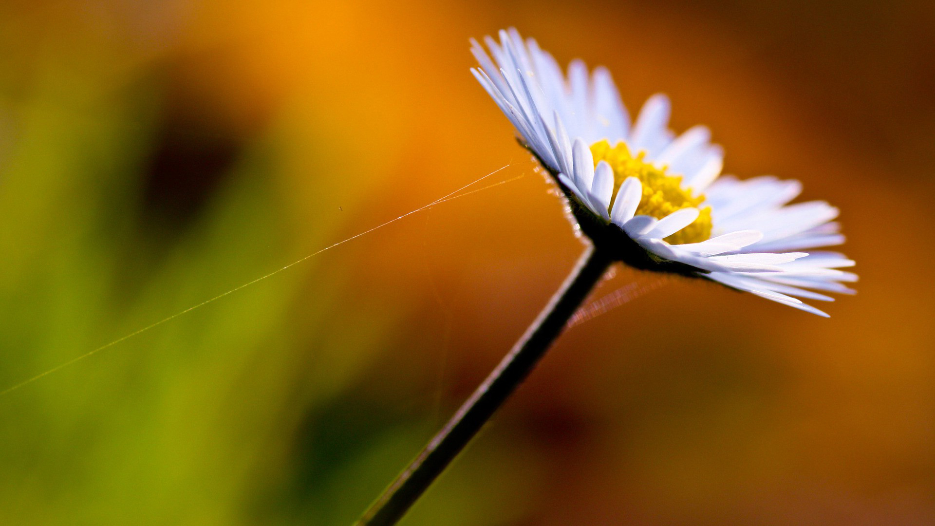 Macro Flowers Wallpaper