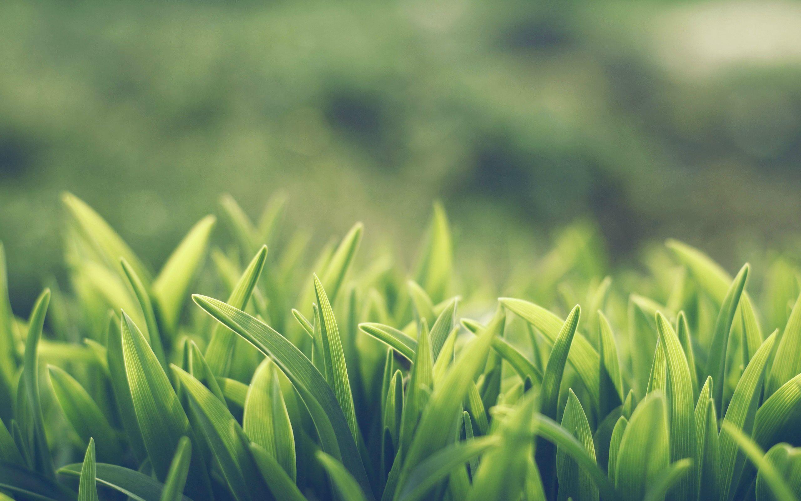 Macro lawn