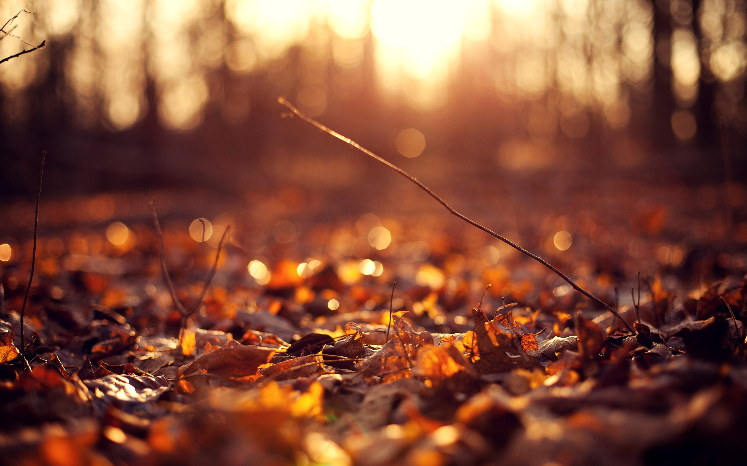 sun autumn macro leaves wallpaper background