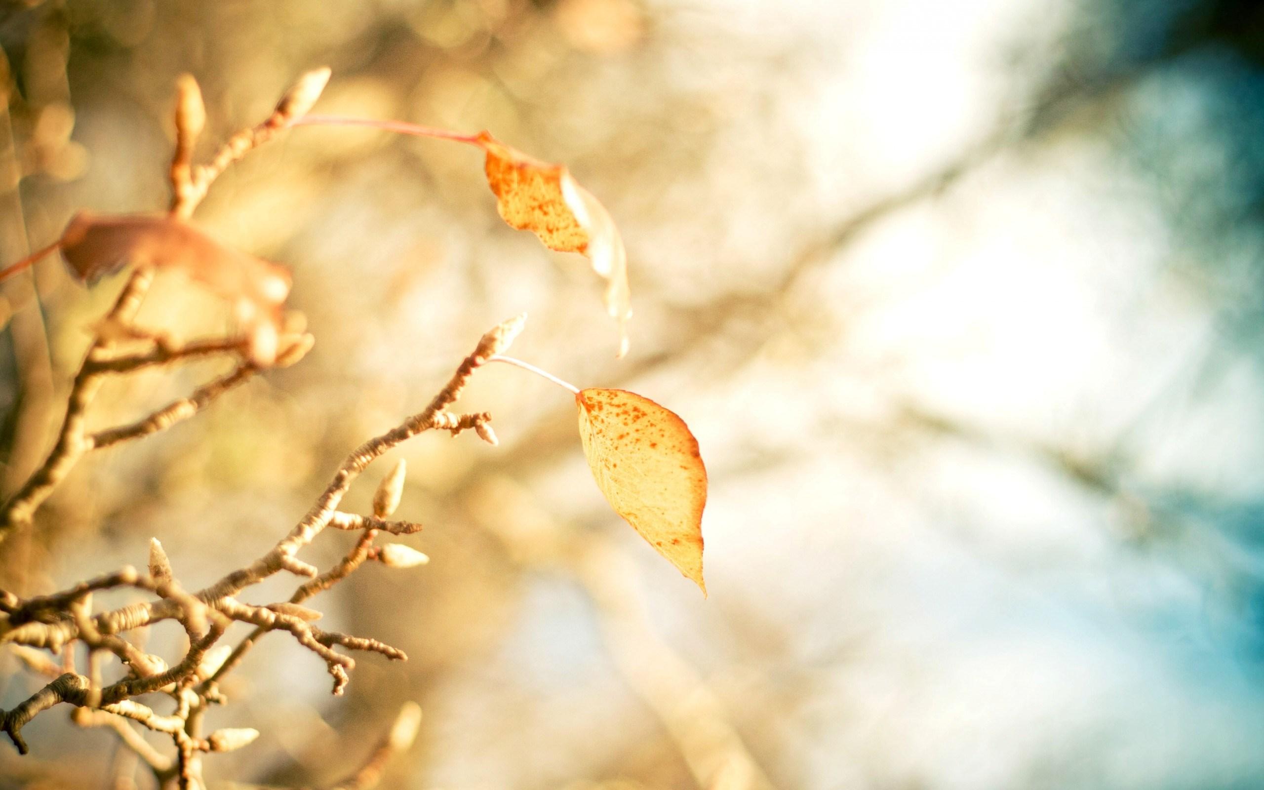 Macro Leaf Branch Autumn