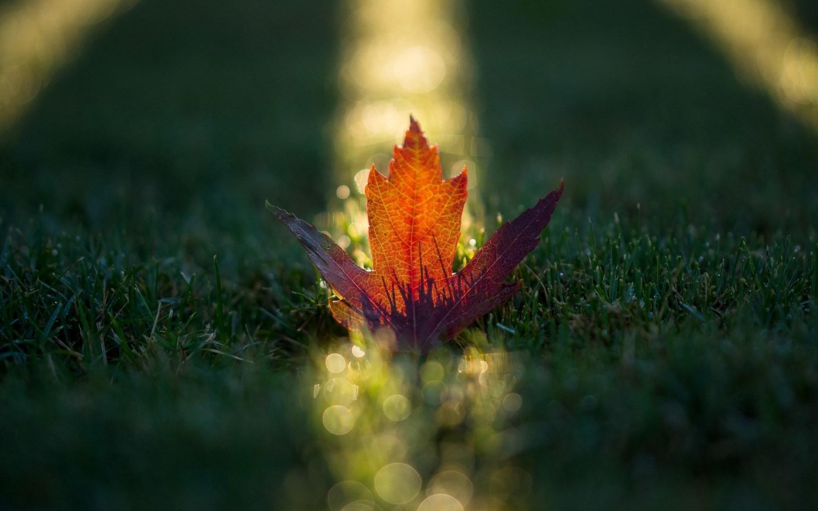 Macro Leaf Grass