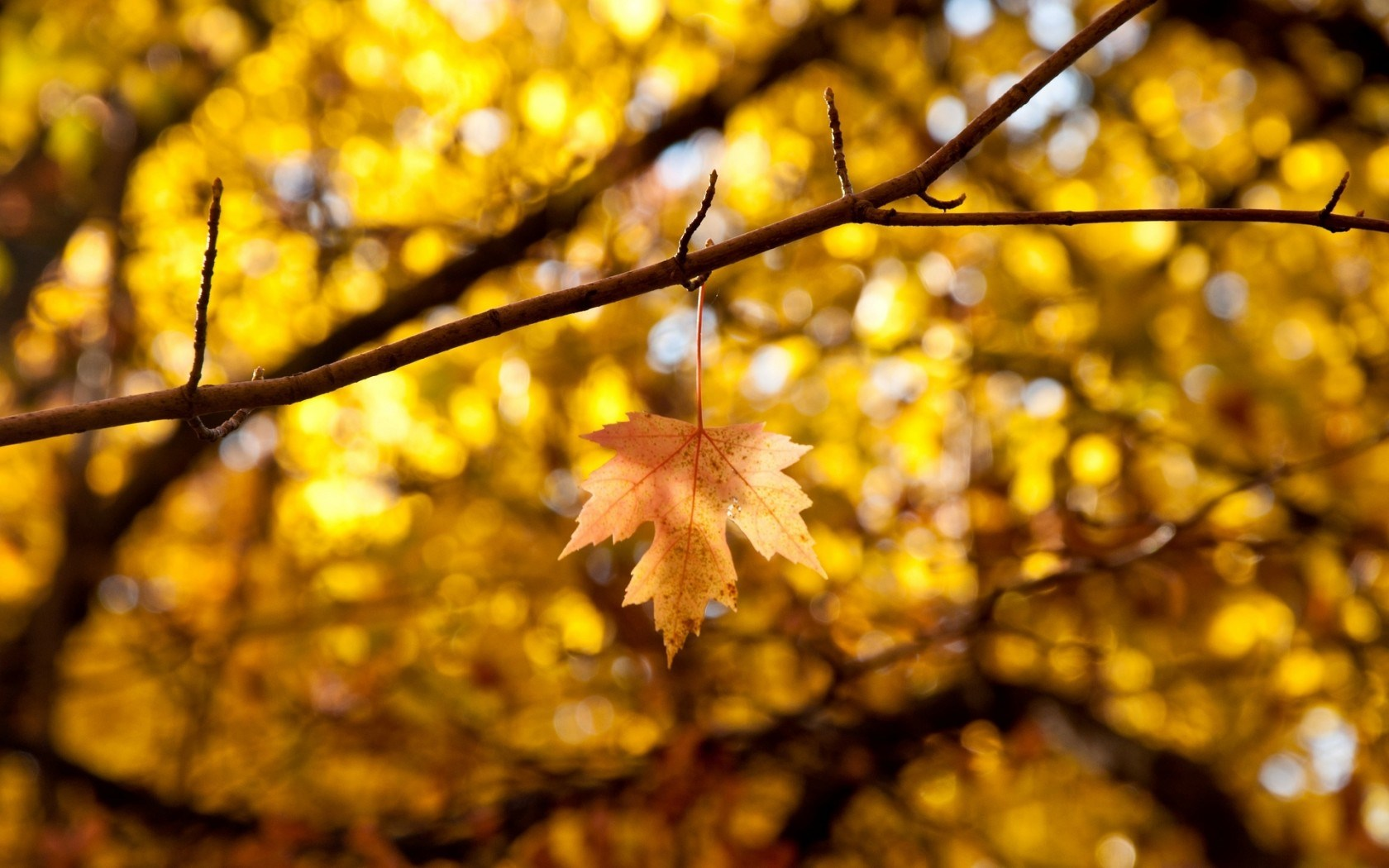 Macro Leaf Leaves Yellow Autumn Branches