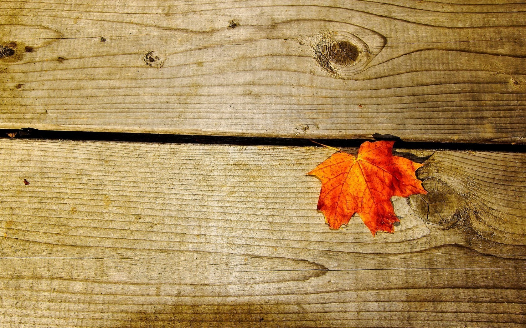 Macro Leaf Orange Autumn