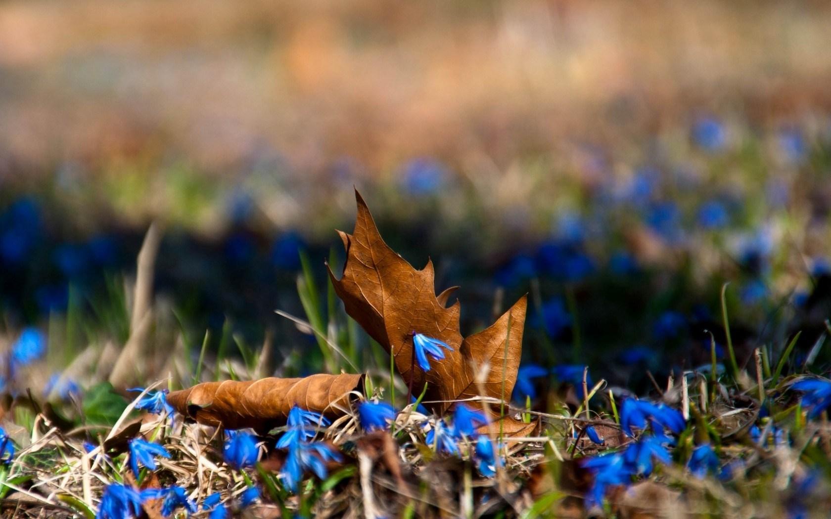 Macro Leaves Flowers Blue
