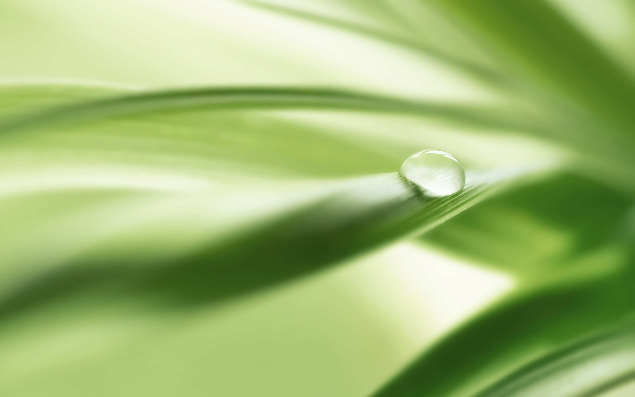Download Wallpaper green nature leaves water drops macro dew -8845-12