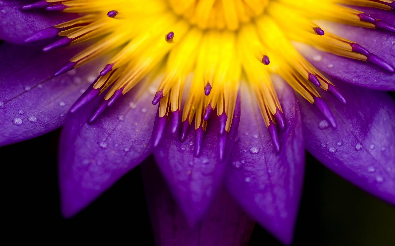 Macro purple yellow flower