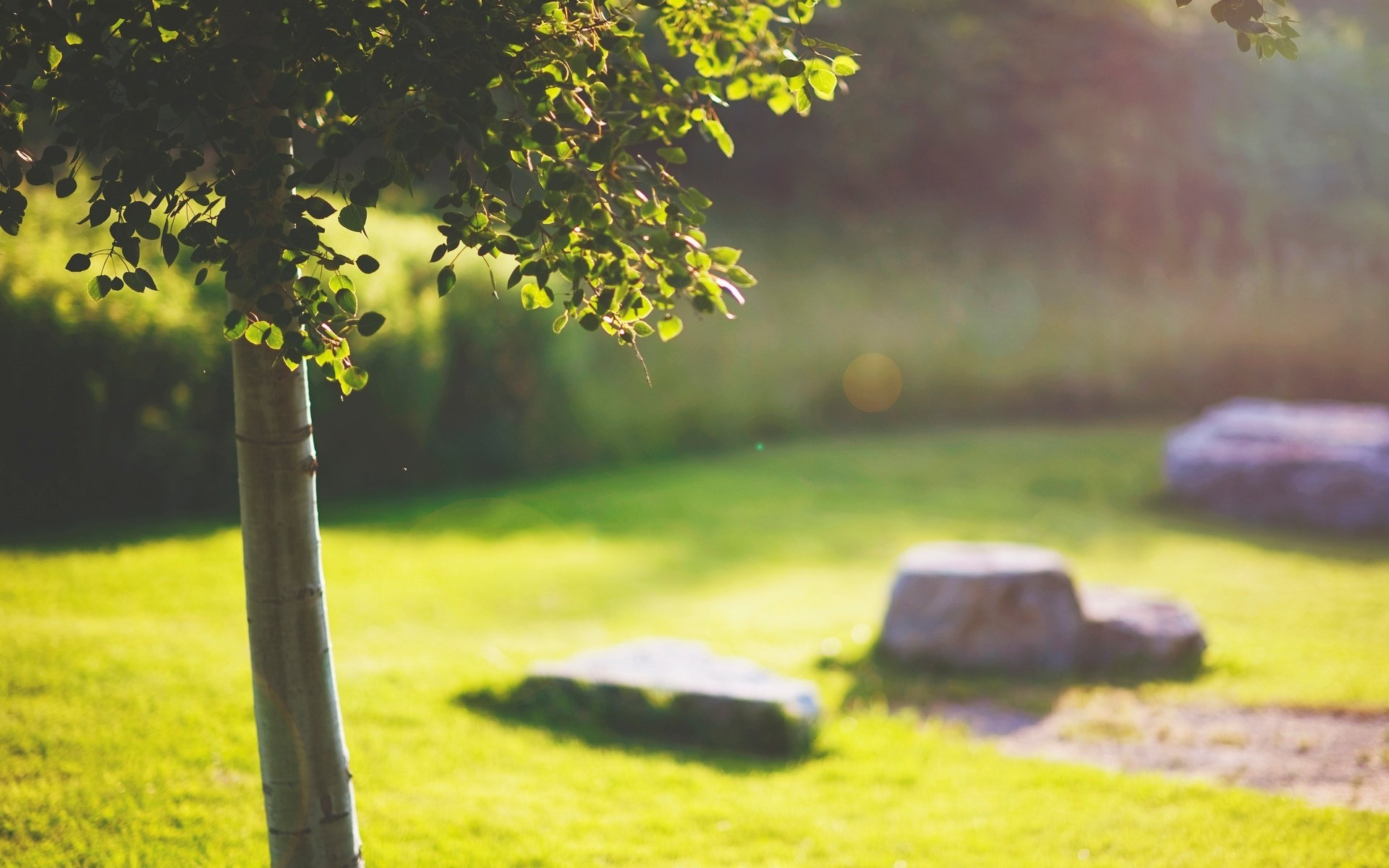 Macro Tree Leaves Grass Stones Nature