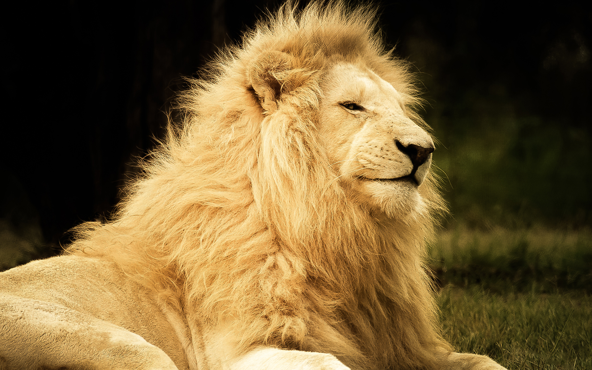 Majestic king