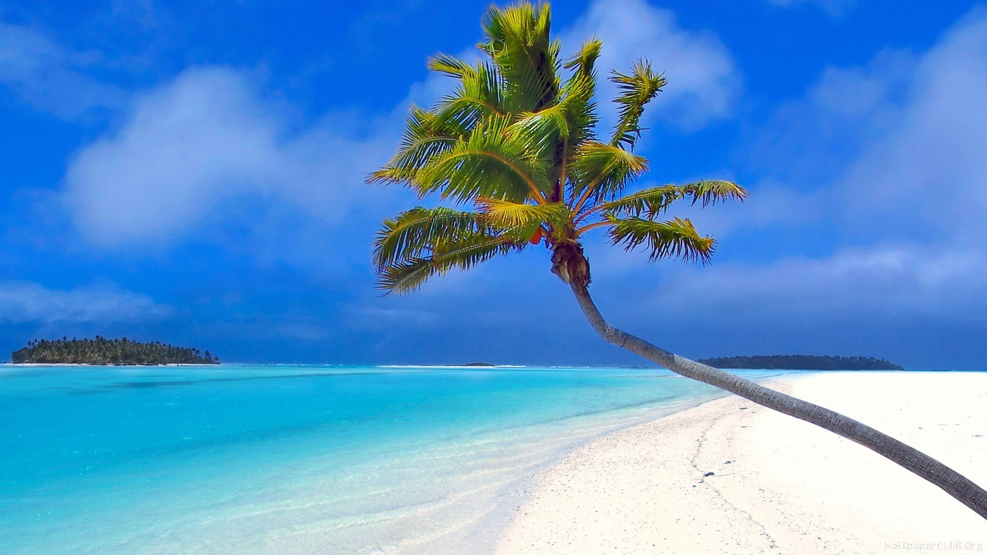 Maldives beach palm