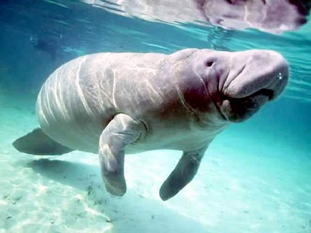 Florida Fishing News: Look Out for Manatees - Live Trading News | Live Trading News