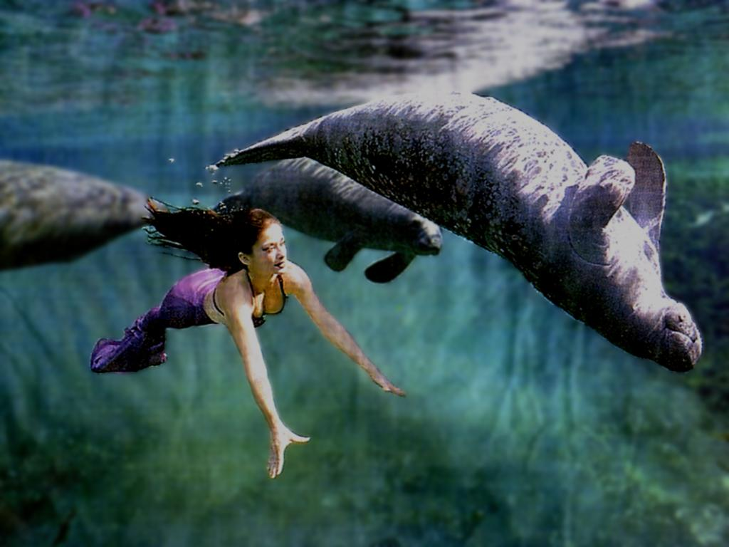 a paper on the plight of the manatee By guest essay by phillipe cousteau  plight of the manatees  continues 40 years after 'the forgotten mermaid'  gazing out over the same  water, pondering the plight of what they called the forgotten mermaid.