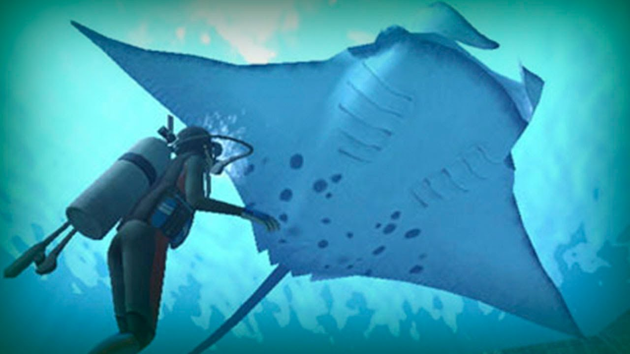 Manta ray, a giant of the ocean