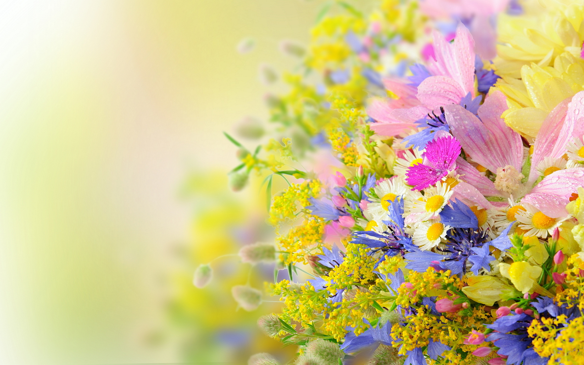 Many summer flowers