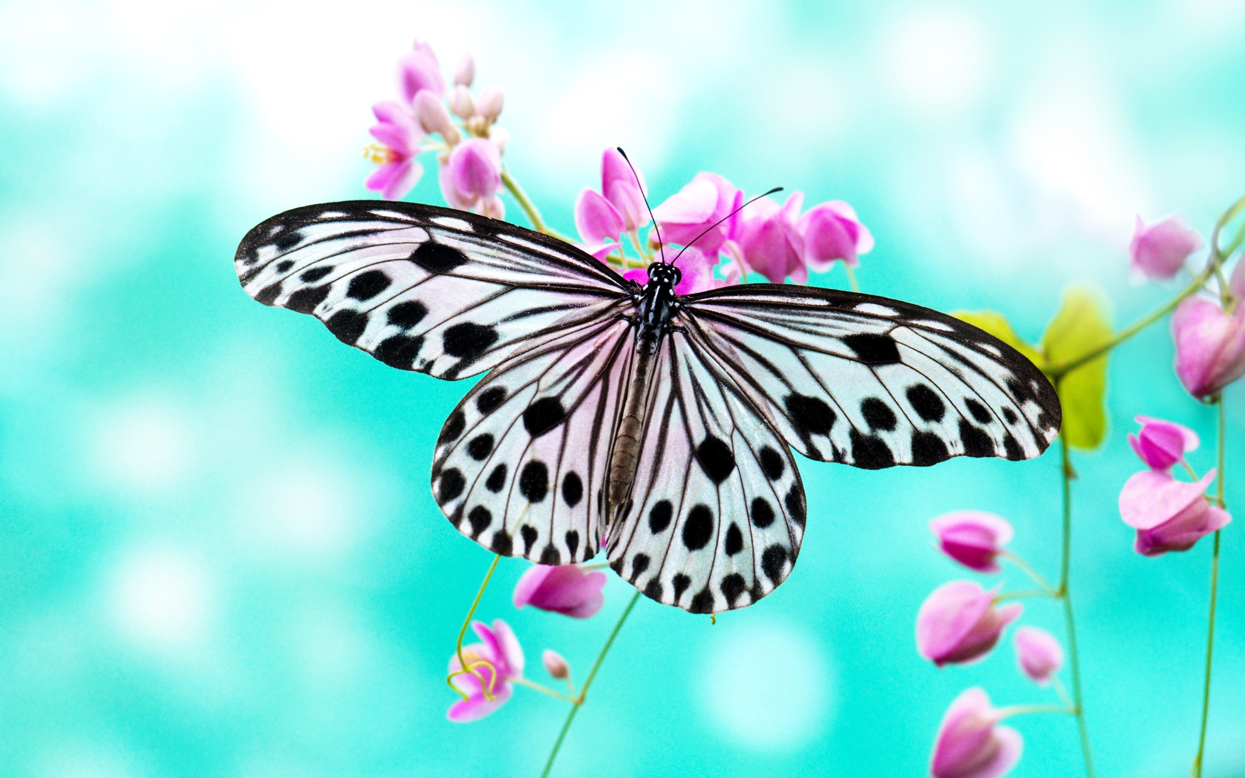 Marble butterfly