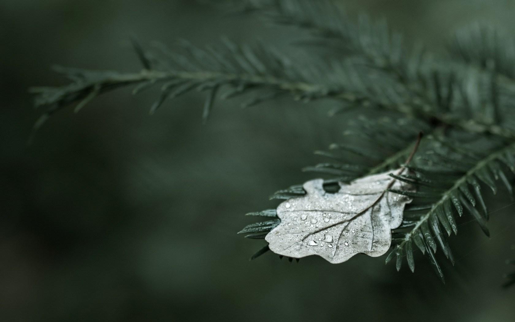 Marco Tree Leaf Nature