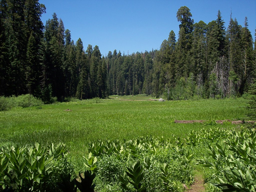 File:Crescent Meadow.jpg