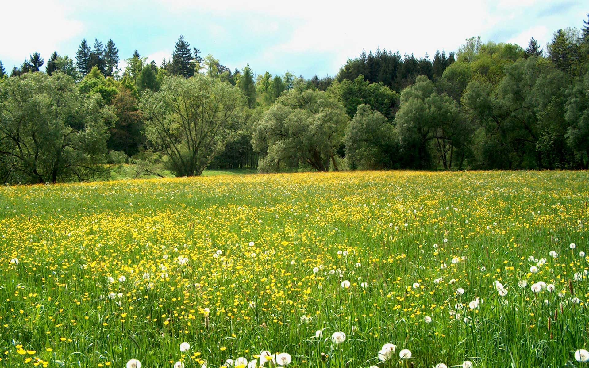Pretty Meadow Wallpaper 13857