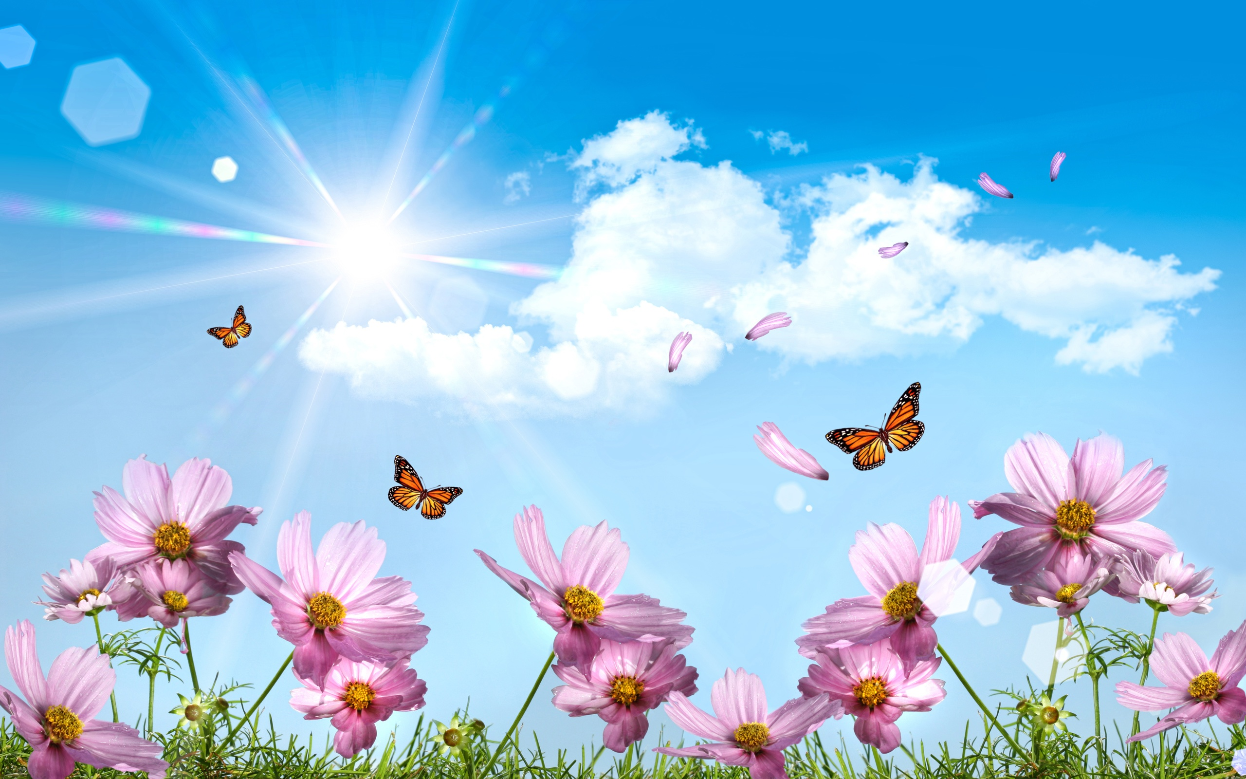 Description: The Wallpaper above is Meadow Butterflies Wallpaper in Resolution 2560x1600. Choose your Resolution and Download Meadow Butterflies Wallpaper