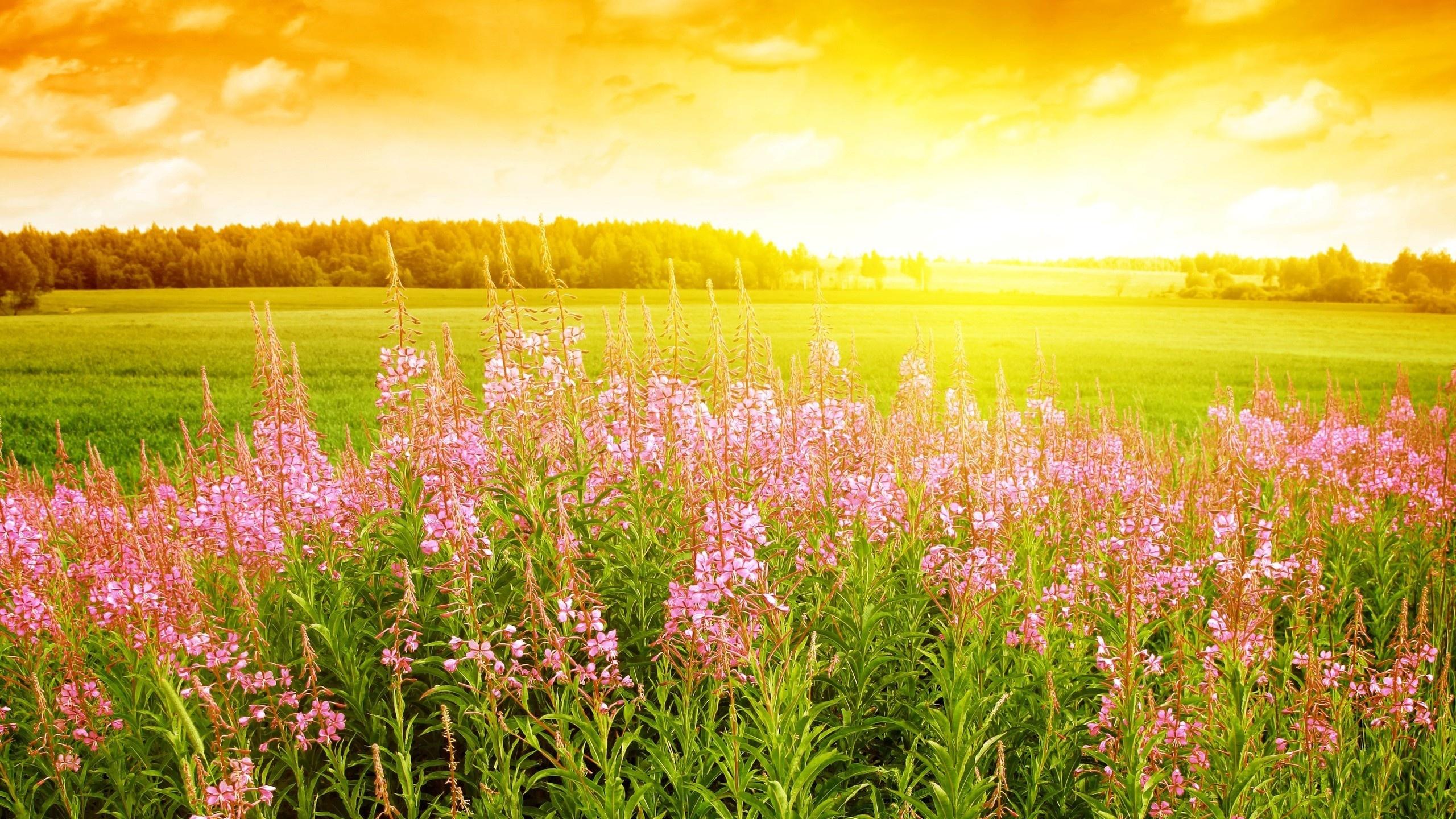 Meadow Wallpaper HD